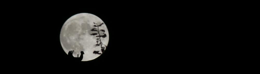 landskouter-site-background-Maan.jpg