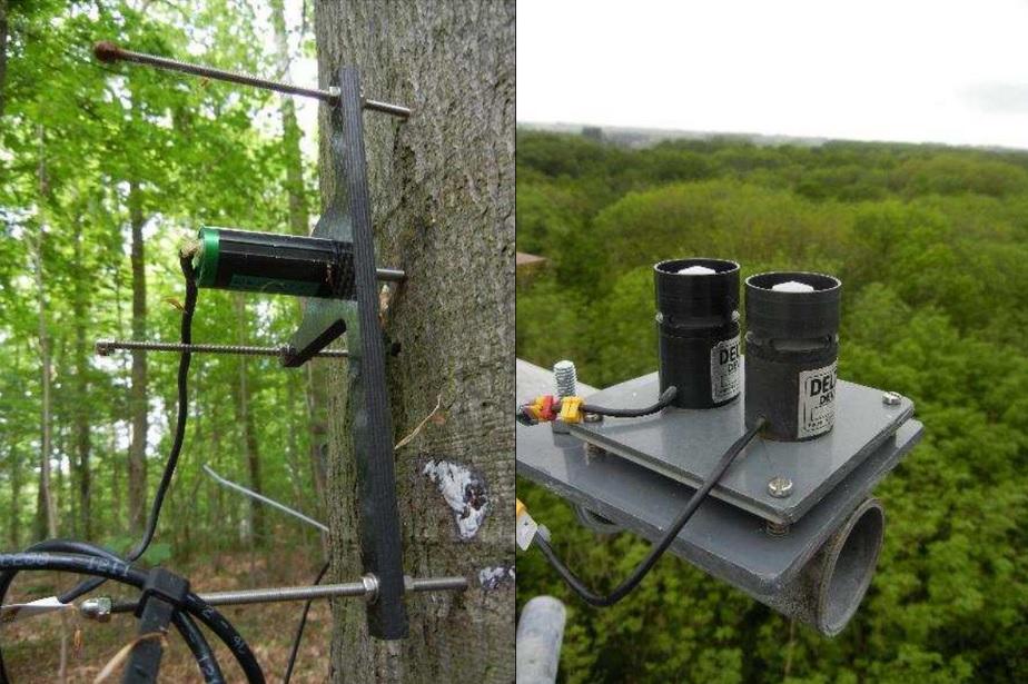 De dendrometer op een van de beuken meet hoeveel de boomstam krimpt en zwelt doorheen de dag. De solarimeter bovenop de meettoren meet de zonnestraling. (foto's Sanne Van Den Berge)